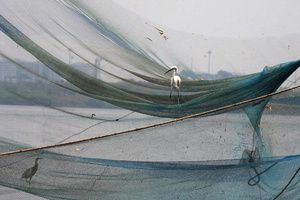 Cochin, Chines Fishing Nets
